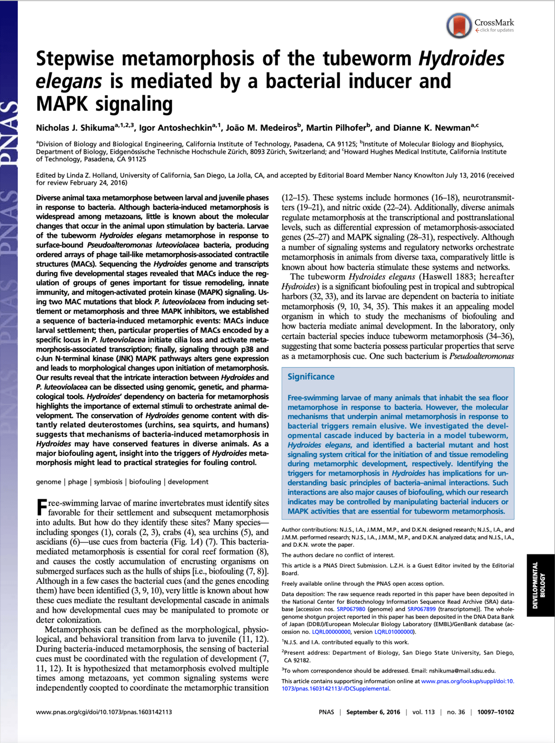 Stepwise metamorphosis of the tubeworm Hydroides elegans is mediated by a bacterial inducer and MAPK signaling